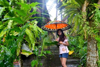 A walk in the rain..
